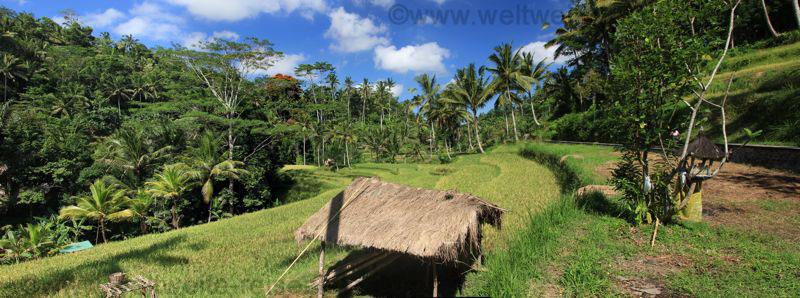 Panorama Reis Terrassen und Unterstand bei Gunung Kawi, Bali
