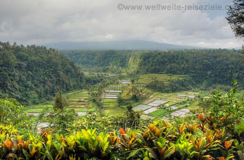 Ausblick Terrasse Restaurant auf Reisfelder im Tal, Bali Zentrum