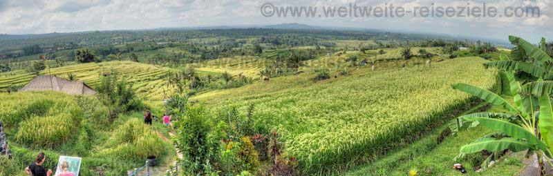 Panorama Reisterrassen bei Jatiluwih