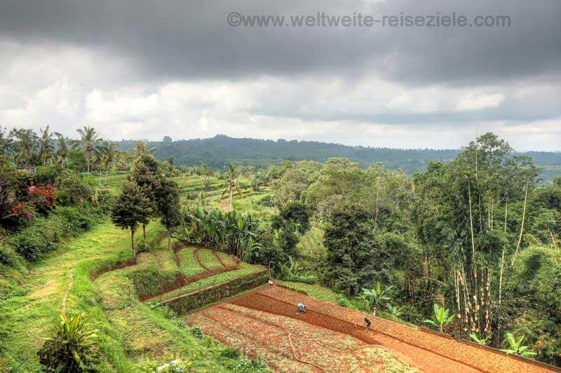 Reisterrassen und landwirtschaftliche Flächen in Bali