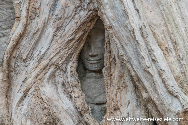 Gesicht zwischen Wurzeln im Ta Prohm Tempel