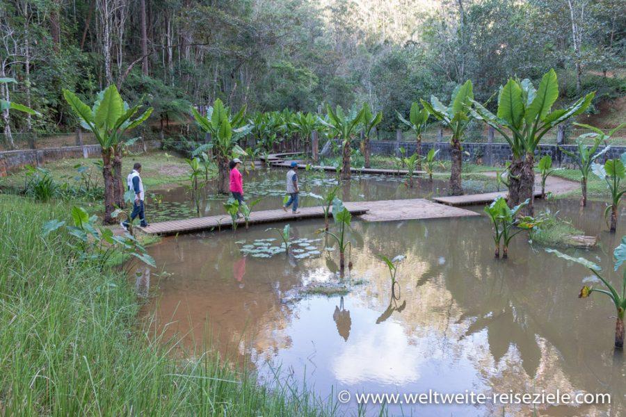 Wanderung auf Stegen über einen Teich im Vakona Reservat