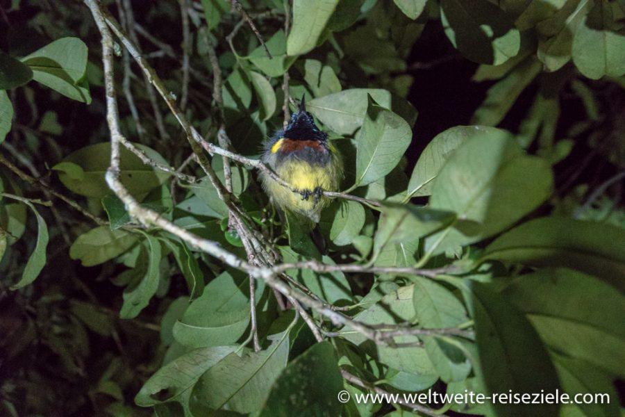 Schlafender Vogel bei der Nachtwanderung