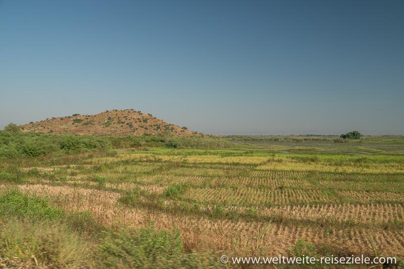 Reisfelder in der Ebene auf dem Weg von Miandrivazo nach Morondava