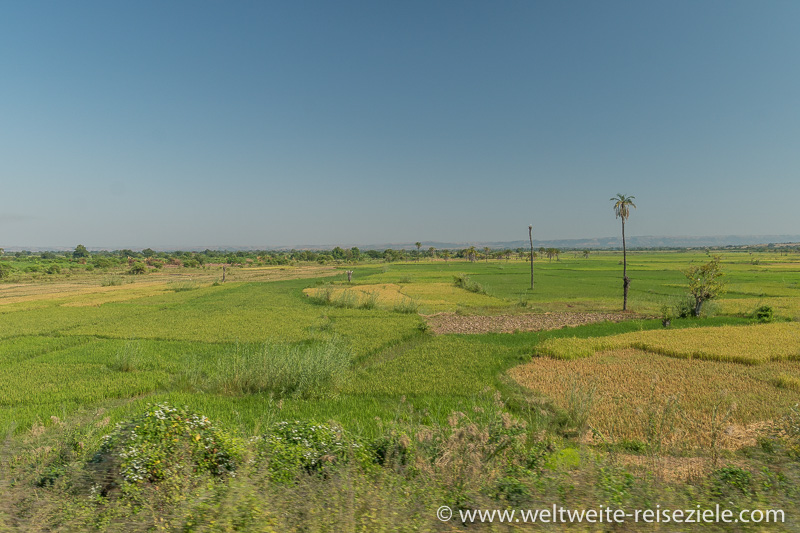 Ebene mit grünen Reisfeldern auf der Fahrt von Miandrivazo nach Morondava