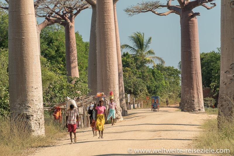 Einheimische in bunten Gewändern Baobab Allee Morondava