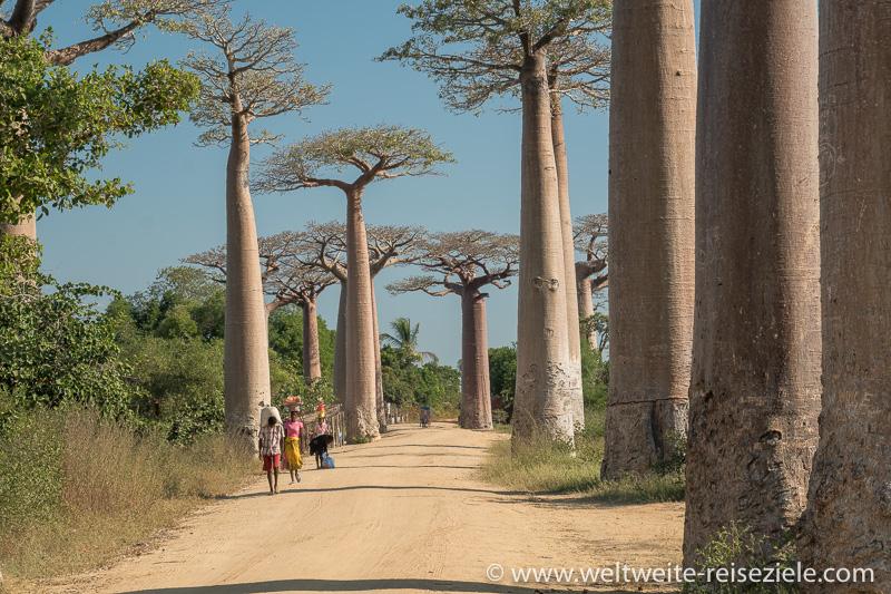 Baobab Allee Morondava, Madagaskar