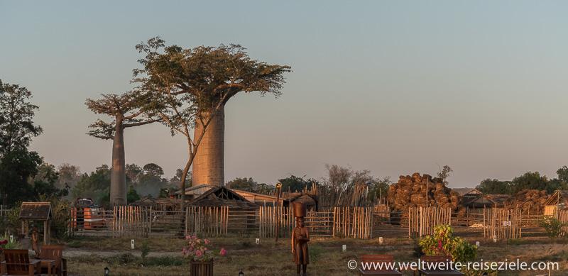 Heiliger Baobab und Dorf neben dem Hotels, Relais du Kirindy