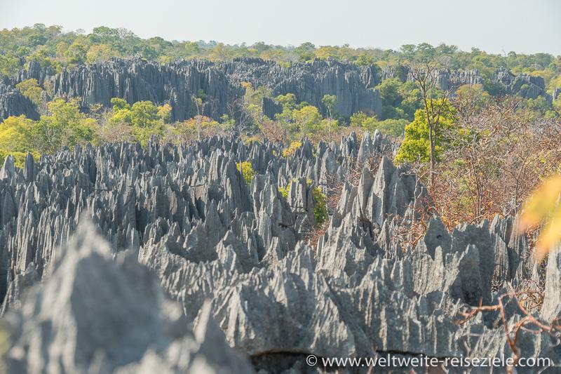 Kalkstein Spitzen im Nationalpark Tsingy de Bemaraha