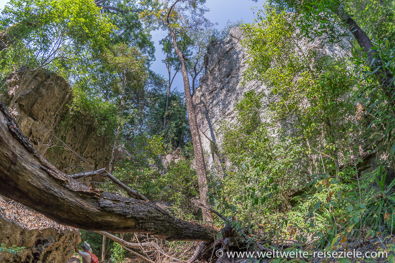 Vegetation mit Bäumen in den Schluchten des Tsingy de Bemaraha