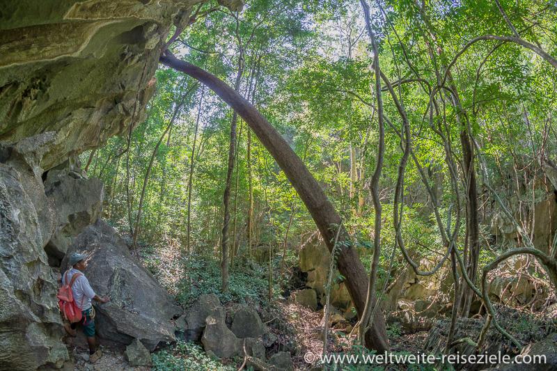 Grüner, relativ dichter Trockenwald im Nationalpark Tsingy de Bemaraha