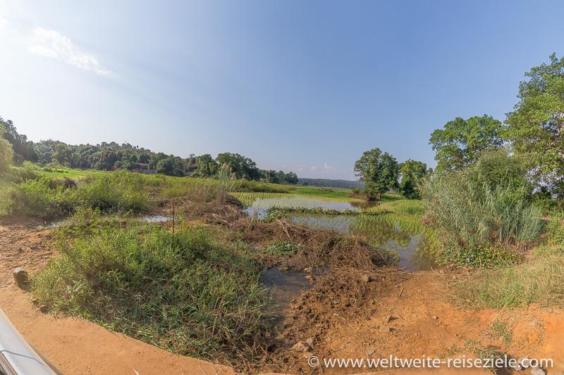 Reisanbau an einer Lagune bei Bekopaka, Madagaskar