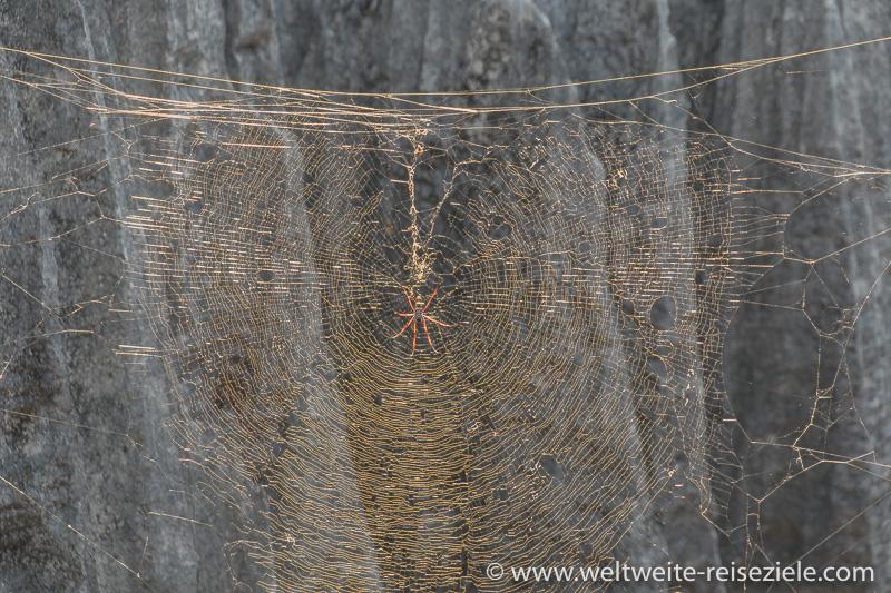 Spinnennetz mit grosser Spinne mit roten Beinen im Petit Tsingy de Bemaraha