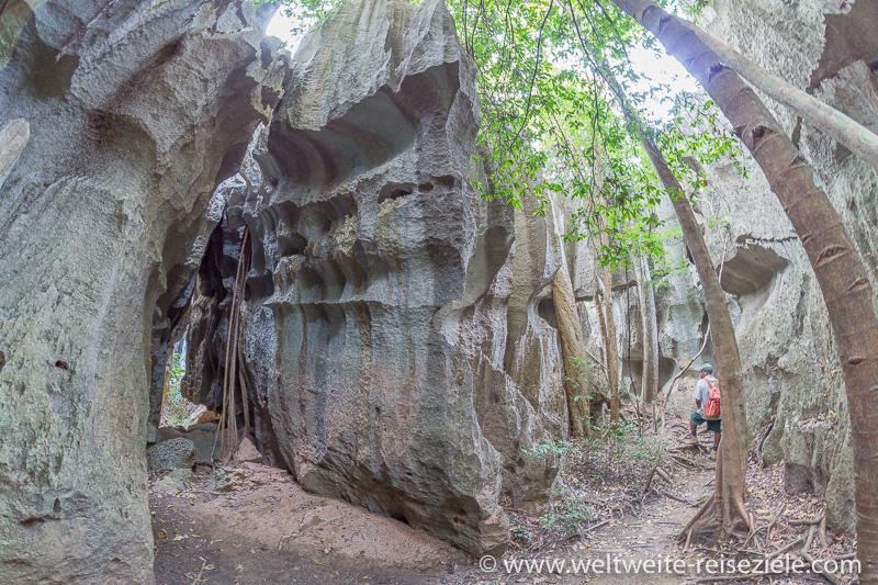 Felslabyrinth mit Bäumen im Petit Tsingy de Bemaraha