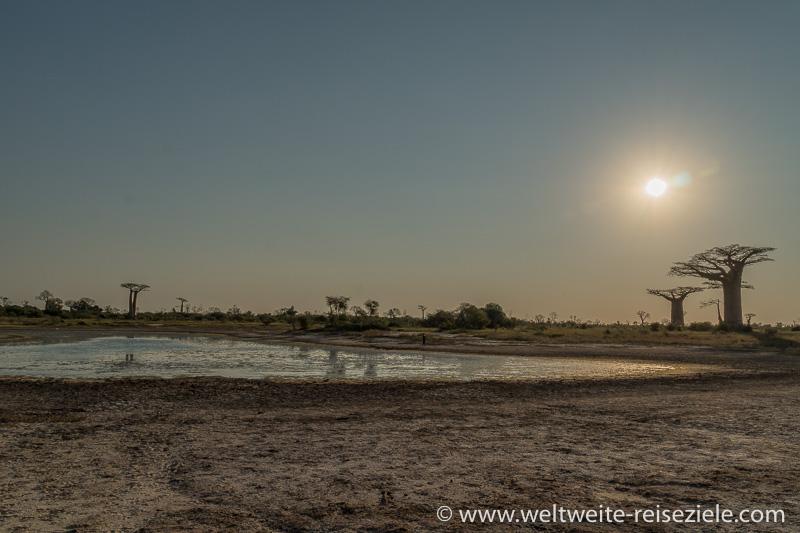 Lagune mit Baobabs. Nähe Baobab Allee Morondadva.
