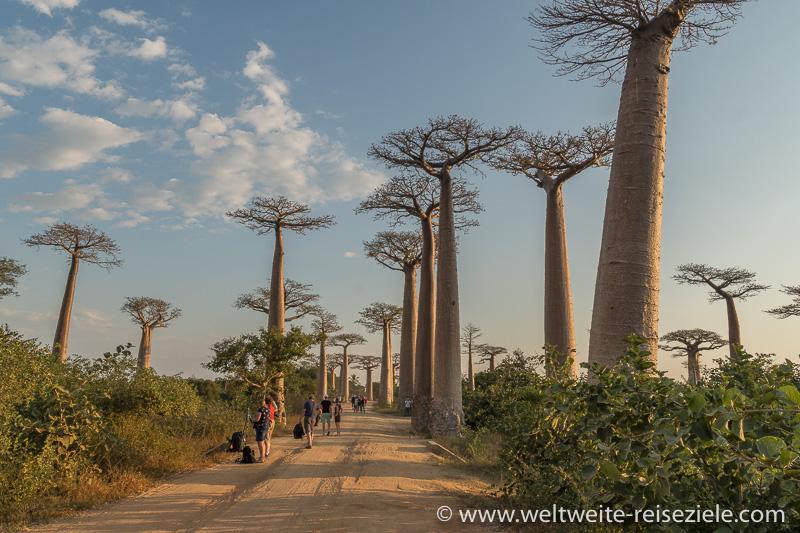 Touristen an der Baobab Allee von Morondava