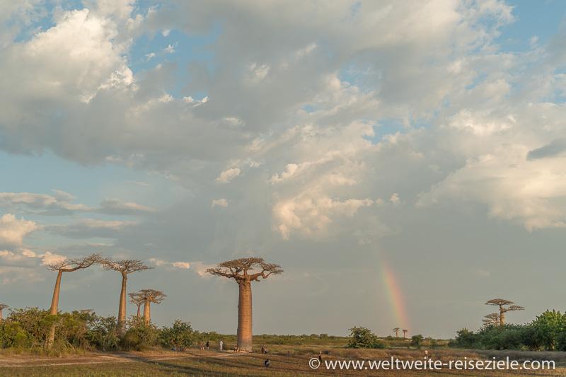 Regenbogen und mehrere Baobabs, Madagaskar