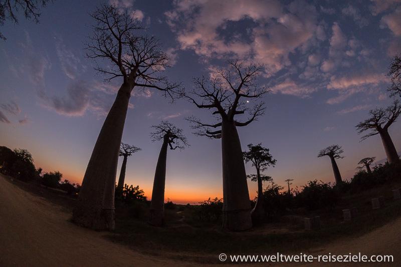 Abendrot mit Baobabs und Mond, Madagaskar