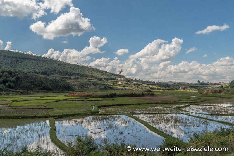Reisfeld mit Wasser, Madagaskar, Andasibe