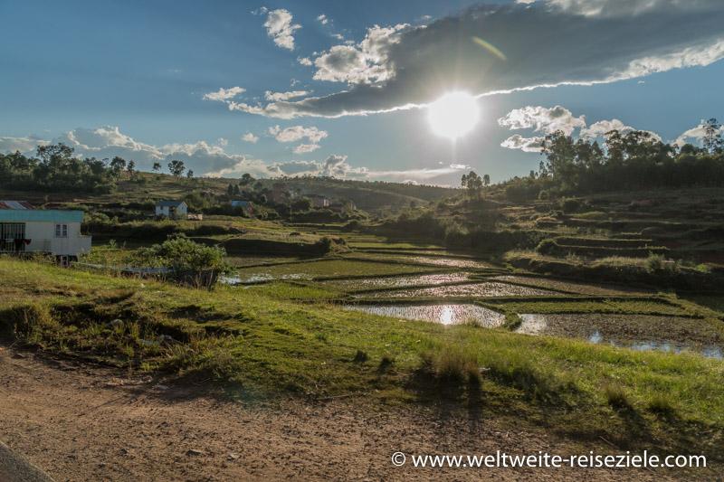 Reisfelder am späten Nachmittag vor Antsirabe