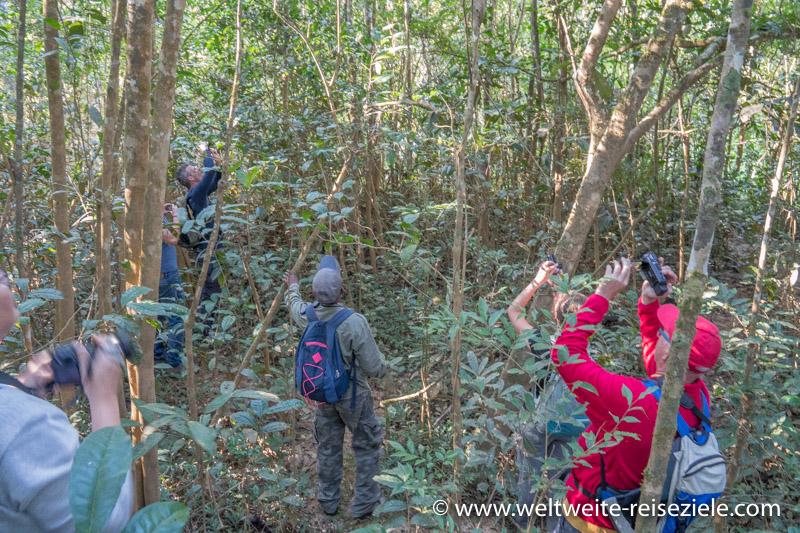 Besucher im Nationalpark von Analamazaotra, beim Fotografieren