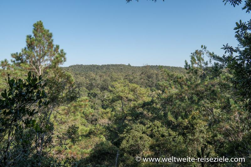 Aussichtspunkt über den Wald des Nationalpark von Analamazaotra