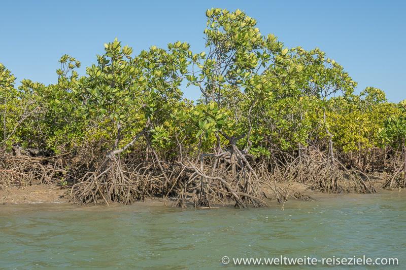 Mangroven beim Kanal zwischen Morondava und Betania