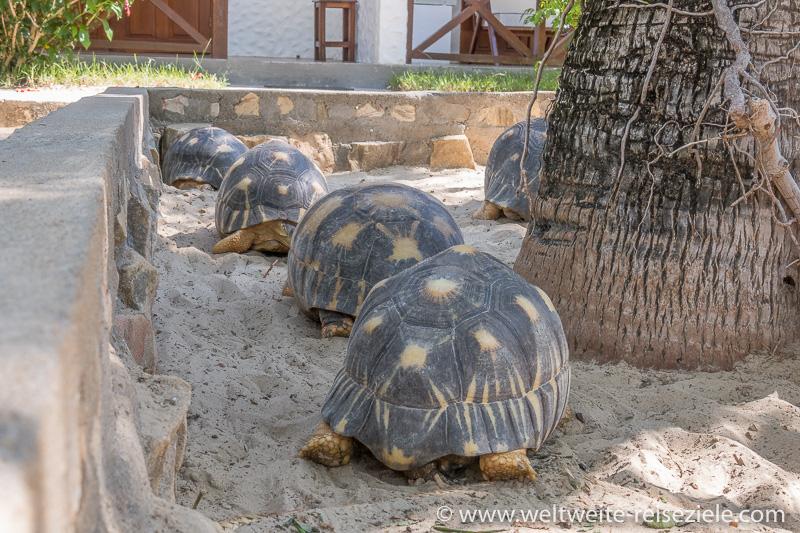 Schildkröten beim Hotel Sun Beach, Morondava