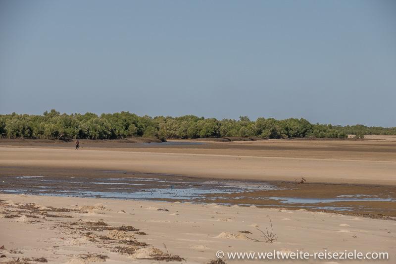 Gebiet der Mangroven bei Ebbe, Morondava