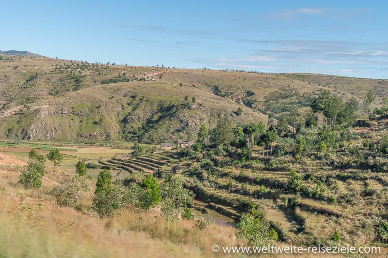 Landschaft nach Antsirabe in Richtung Süden, Reisterrassen, Kiefern und grasige Hügellandschaft