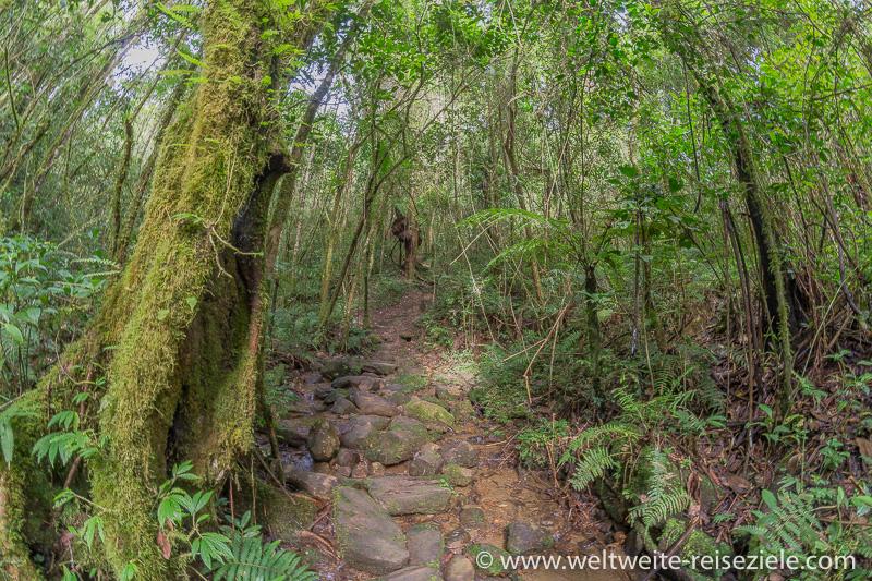 Wanderweg durch den bemoosten Wald, Nationalpark Ranomafana
