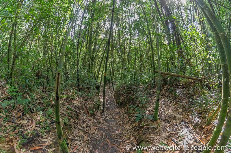 Wanderweg durch den Bambuswald, Ranomafana Nationalpark