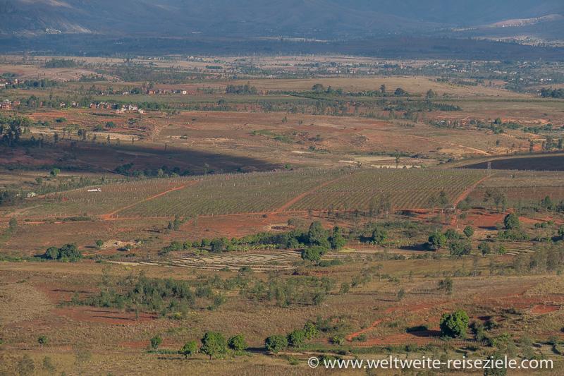 Weinbaugebiet zwischen Fianarantsoa und Ambalavao