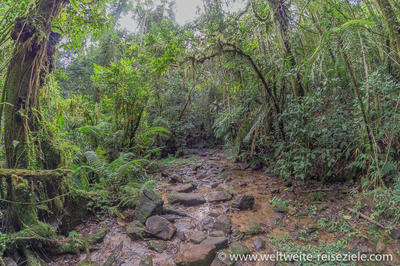 Bach im dichten Wald, Ranomafana Nationalpark