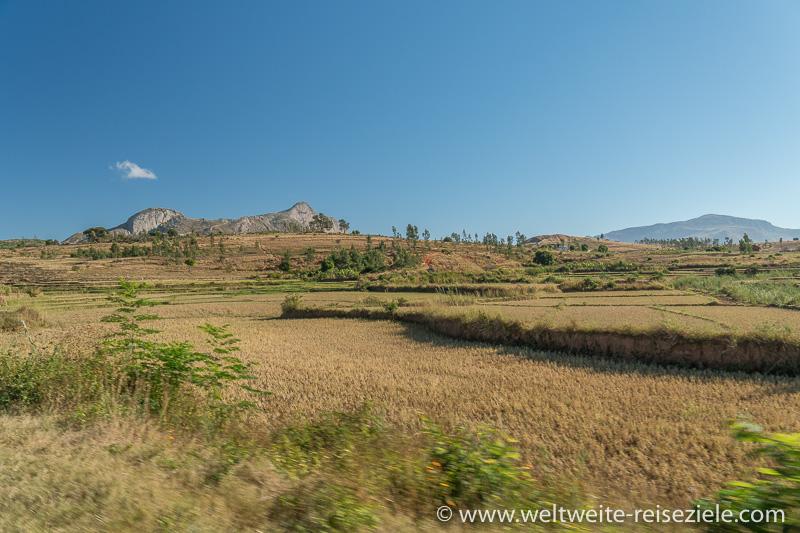Landschaft mit Reisfelder, zwischen Ambalavao und dem Reservat von Anja, Madagaskar