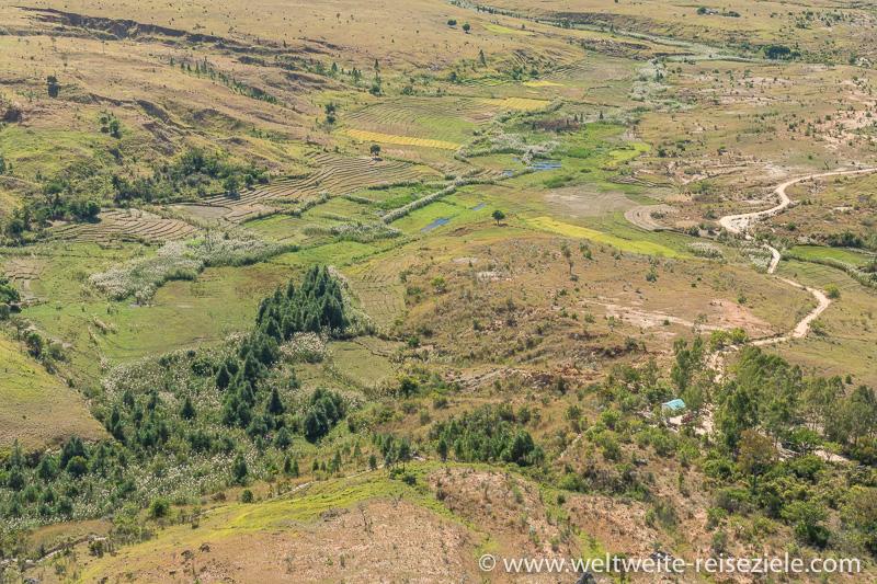Reisfelder am Start/Endpunkt zur Wanderung Canyon Nationalpark Isalo