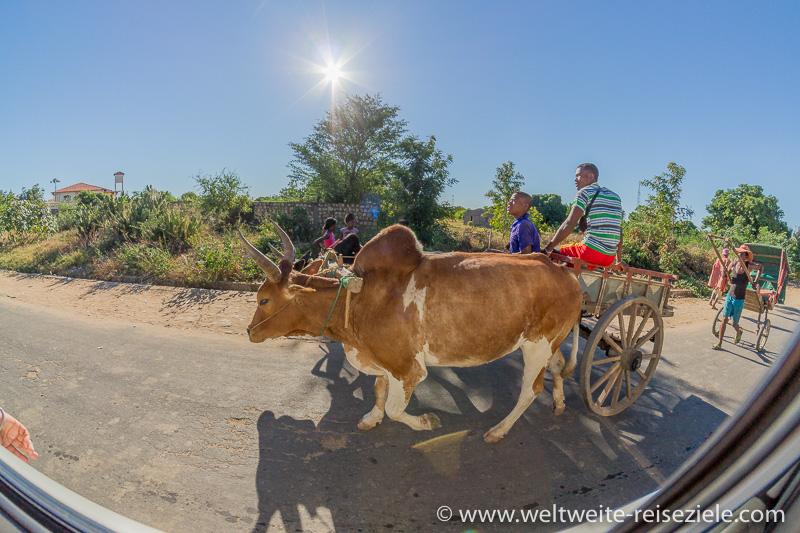 Zebu Karren zur Beförderung von Personen, Madagaskar