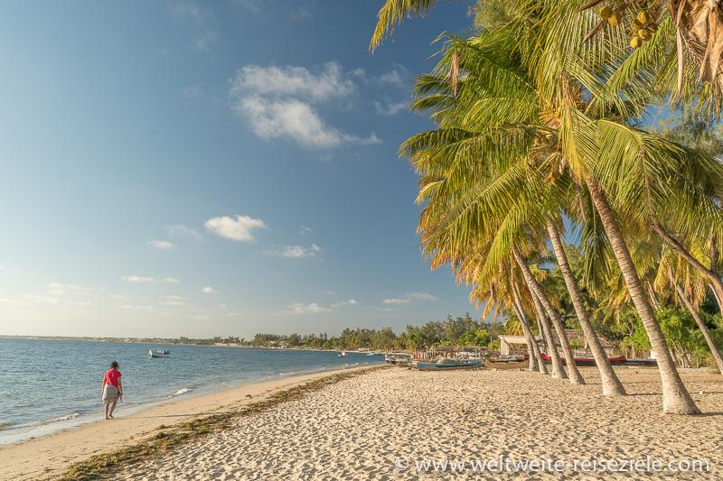 Palmen am Sandstrand von Mangily