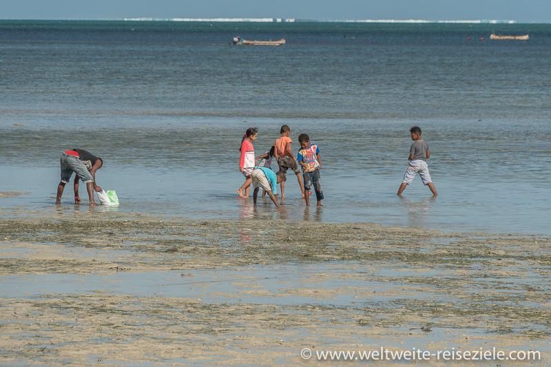 Kinder suchen Muscheln und Schnecken im flachen Wasser, Mangily