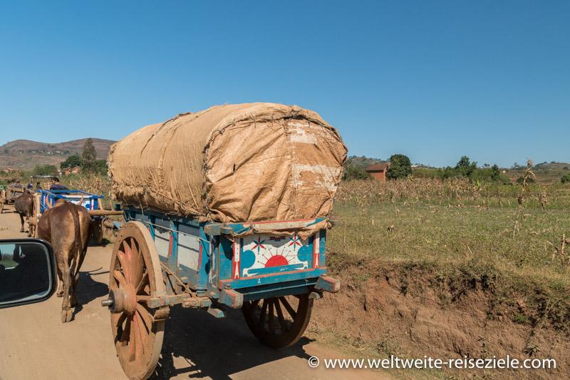 Zebu Karren, auf dem Web von Antsirabe zum Kratersee von Tritriva