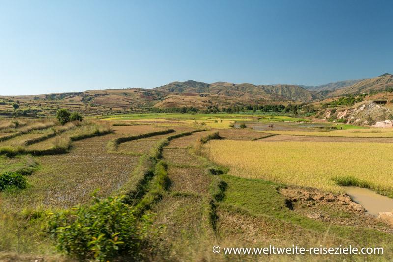 Reisfelder und Reisterrassen an der Strasse von Antsirabe und Mandoto