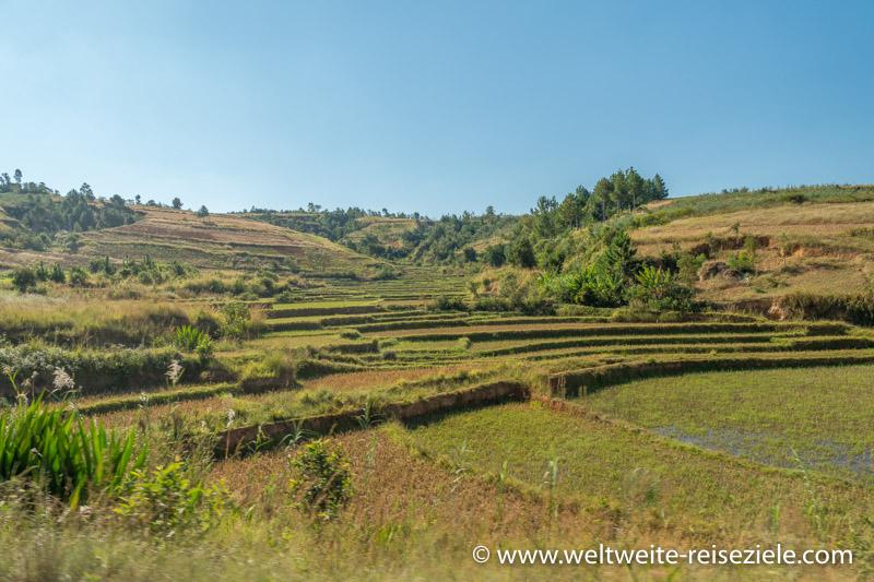 Reisterrassen an der Strasse von Antsirabe nach Mandoto