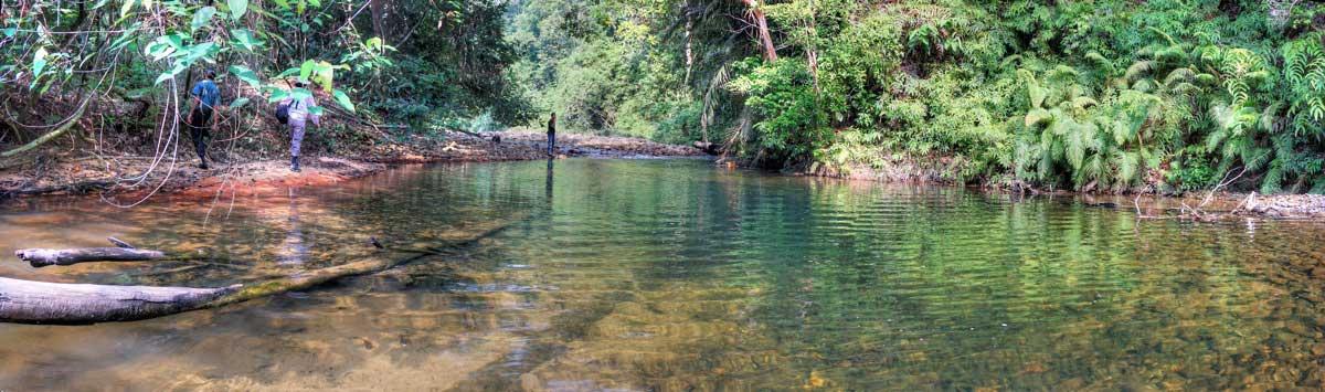 Fluss im State Park, Malaysia