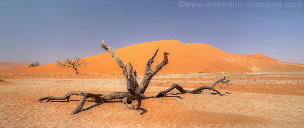 Abgestorbener Baum vor der Düne 45, Sossusvlei, Namibia