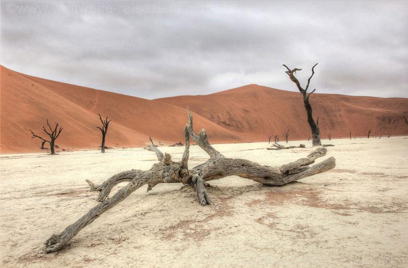Abgestorbener Baum am Dead Vlei, im Hintergrund Big Daddy