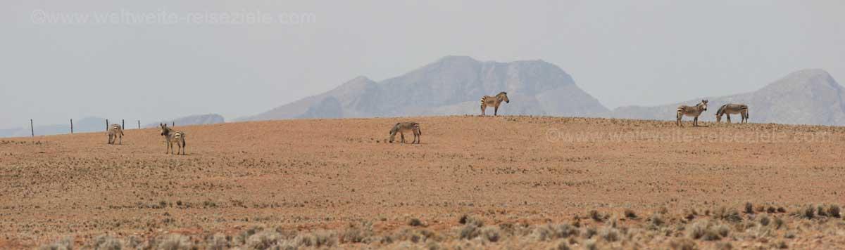 Zebras am Strassenrand, Solitaire in Richtung Walfischbay