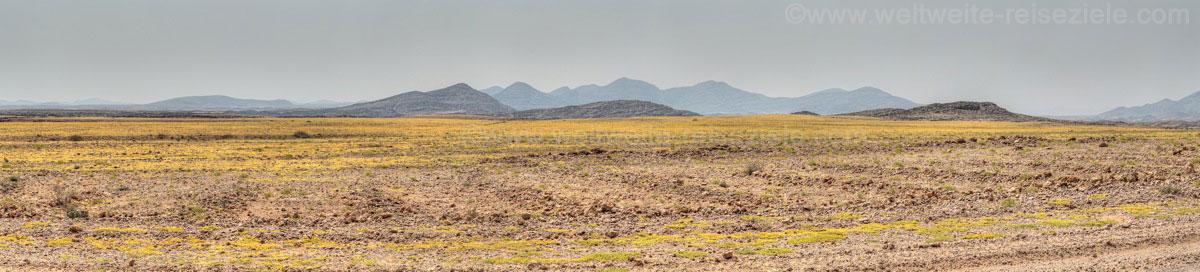 Gelb blühende Landschaft nach dem Kuiseb Canyon nach Walfischbay