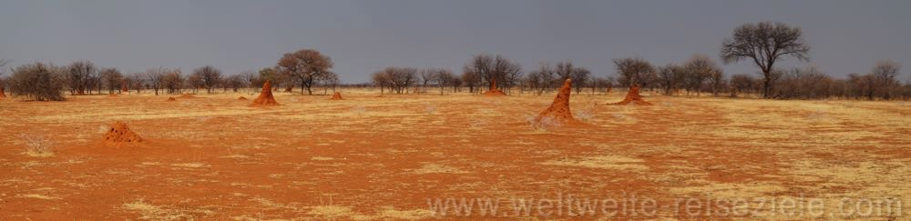 Rote Ebene vor dem Etoscha Park mit vielen Termitenhügeln