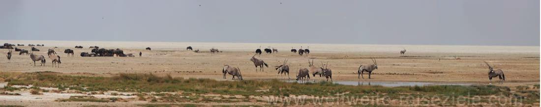 Okondeka Wasserloch mit Oryx und Gnus, Etosha
