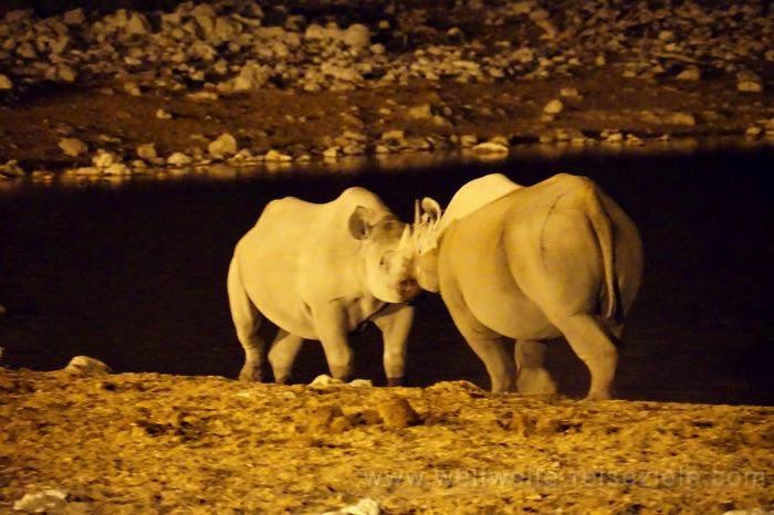 Zwei Nashörner streiten nachts am beleuchteten Okaukuejo Wasserloch, Etosha Nationalpark